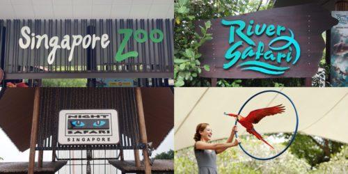 【KKday】シンガポール四大動物園の割引クーポンチケット予約方法