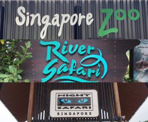 シンガポール動物園、リバーサファリ、ナイトサファリの効率良い回り方【2019年5月シンガポール旅行記④】
